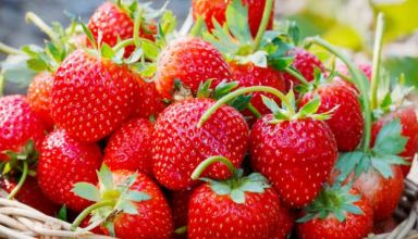 i140414-fraises